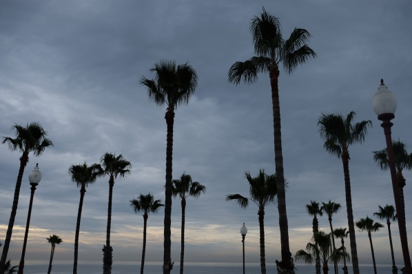 Palm Trees at Oceanside Fishing Pier