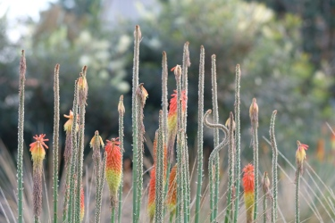 Native and Drought Tolerant Plants